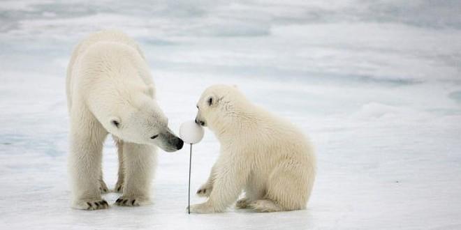 El Ártico se derrite. ¡Salvemos el Ártico!