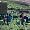La OIT alerta sobre la generalización del empleo precario y los bajos salarios a nivel mundial