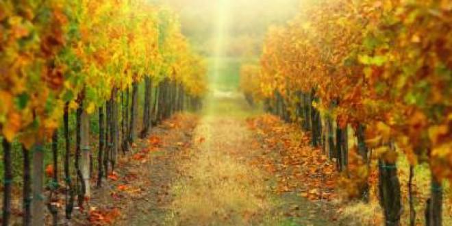 ¿Cuándo empieza el otoño 2015?