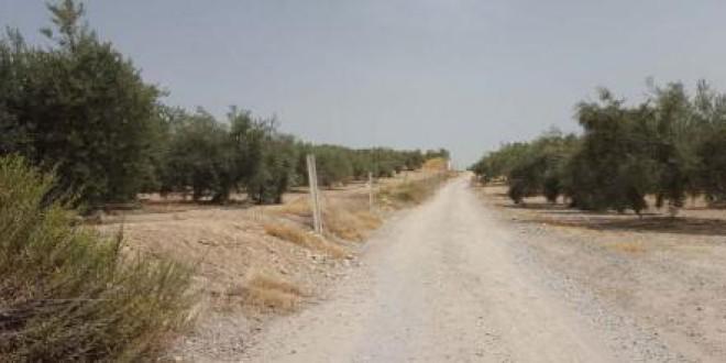 El camino de los Llanos, la vía que une los municipios de Moclín, Atarfe y Pinos Puente, se asfaltará en breve para contribuir al desarrollo del sector agrícola.