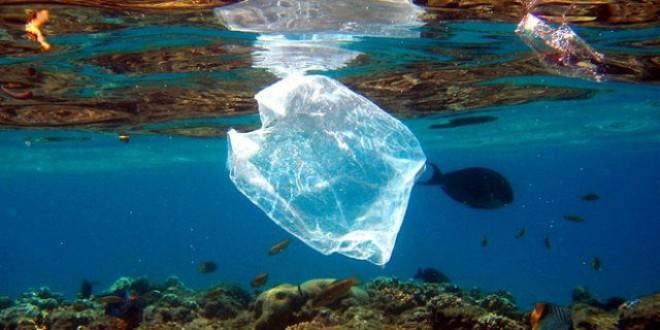 En 15 años habrá 1 kilo de plástico por cada 3 de pescado en el mar