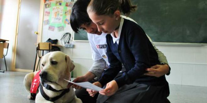 La sustancia llamada 'rapamicina' podría alargar la vida de tu perro entre 2 y 5 años