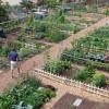 ATARFE: Encuesta para conocer el interés por los huertos urbanos