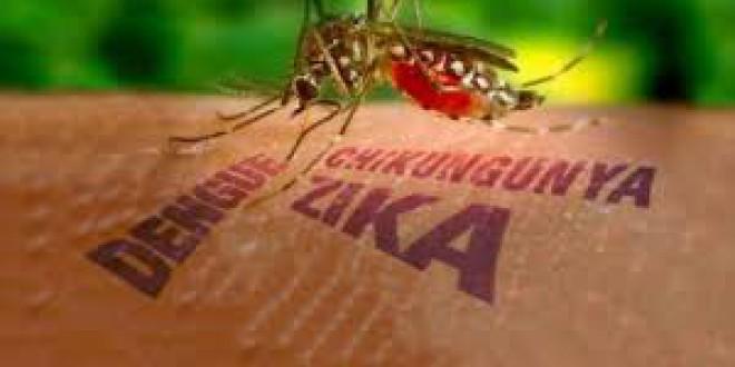 """La OMS: """"El virus del zika se expande de manera explosiva"""""""