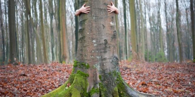 Abrazar árboles ha sido oficialmente validado por la ciencia