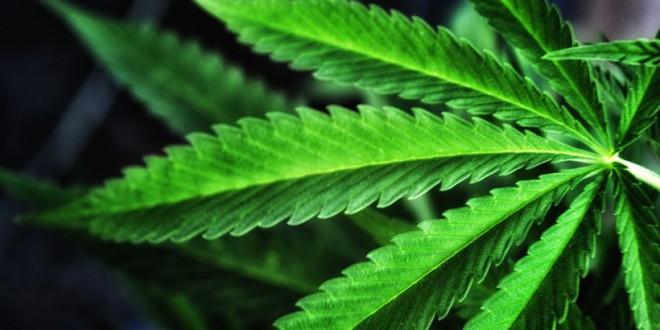 ¿Acabaríamos con el déficit público legalizando la marihuana?