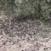 Separar las aceitunas de árbol y suelo mejora la calidad del aceite de oliva virgen