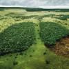 Ejemplo a seguir: Noruega, el primer país del mundo que prohibe la deforestación