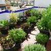 """ATARFE: Jornada lúdica de """"Jardines comestibles y macetohuertos"""""""