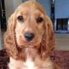 Casi 100.000 mascotas, inscritas en el Registro de Animales de Compañía de Andalucía en el primer semestre de 2016