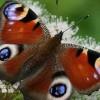 Denuncian que España aplica sólo 1, de las 37 medidas para preservar la biodiversidad