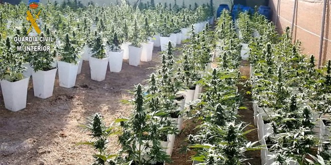 «Rotavator» destapa 6.684 plantas de cannabis en 20 parcelas de Atarfe