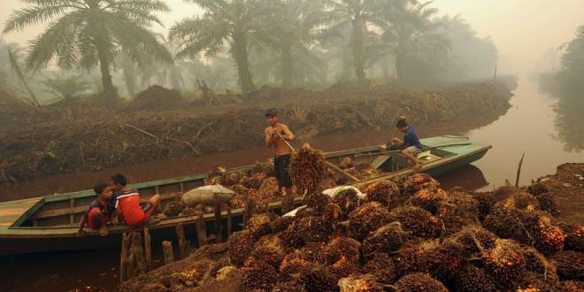 Grandes empresas venden como «sostenibles» productos con aceite de palma producido por mano infantil