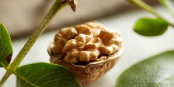La dieta mediterránea suplementada con nueces contrarresta el deterioro cognitivo asociado a la edad