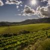 Los agricultores españoles en jaque por el cambio climático