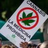 El Congreso estudia legalizar el consumo terapéutico de cannabis ..
