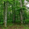 ¿Deforestación? España (y toda Europa) es ahora más verde que hace un siglo