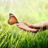 ¿Cuántos insectos hay en el mundo?
