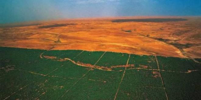 La Gran Muralla Verde del Sahara