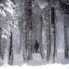 Un invierno cálido sucederá al otoño más seco del siglo XXI