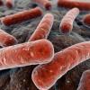 Uno de cada cuatro medicamentos afecta al crecimiento de las bacterias intestinales