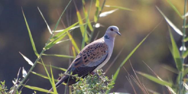 Miles de especies de aves del planeta están en riesgo de extinción, y no hacemos nada
