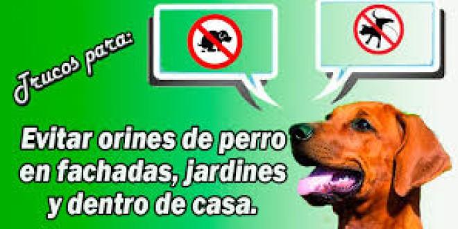 La Policía avisa: poner azufre está prohibido; para el pis de perro, agua y lejía