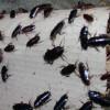 """Advierten de que este verano hay un riesgo """"muy alto"""" de una plaga de cucarachas"""