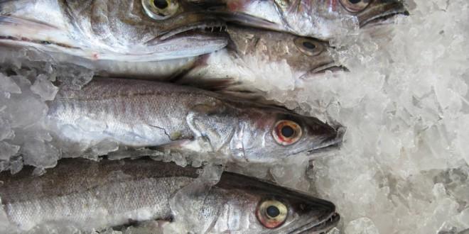 Congelar el pescado no basta para evitar el anisakis: así debes hacerlo