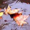 ¿Será este otoño 2018 tan cálido como el del año pasado?