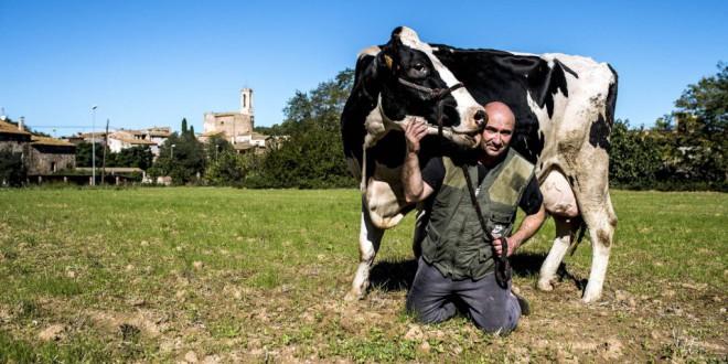 La vaca Mimi no cambia la hora