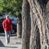 El 25% de los árboles de Madrid son viejos, no arraigan o están enfermos