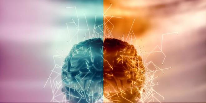 ¿Cuál es la diferencia entre el lado derecho y el izquierdo del cerebro?