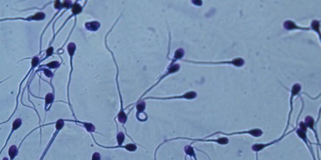 Dejemos de hablar solo de infertilidad femenina: el riesgo entre los hombres ha crecido nueve puntos en una década