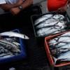 El cambio climático duplica la extinción de las especies marinas