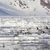 El deshielo de los glaciares se acelera y duplica su contribución a la subida del nivel de los mares