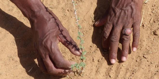 De Siria a España: preservar la protección social ante el cambio climático