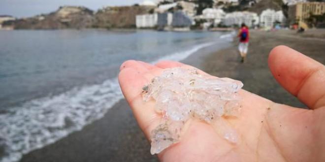 No son medusas: las misteriosas criaturas que plagan las playas de Almuñécar