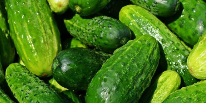 Destapado un fraude alimentario de una empresa de Granada que vendía como 'bio', pepinos convencionales