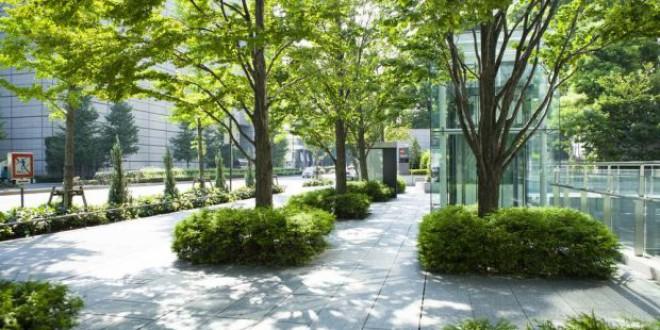 Las ciudades deben pensar en los árboles como un infraestructura de salud pública