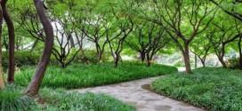 Ante el cambio climático la ONU propone crear bosques urbanos
