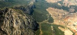 Reforestaciones en España: buenos (y no tan buenos) ejemplos