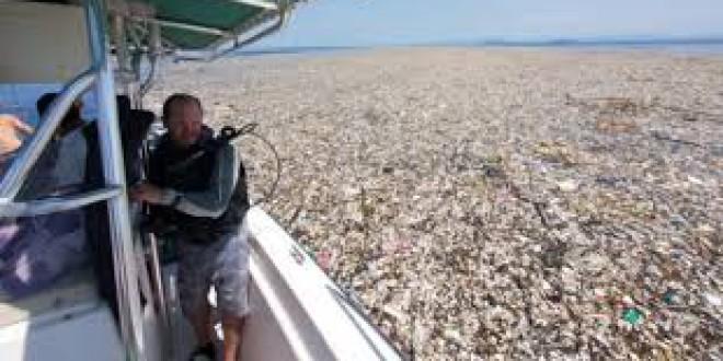 """«Mar de plástico"""" descubierto en el Caribe que se extiende y está asfixiando la vida silvestre de la zona"""
