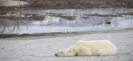 El cambio climático se ceba en Rusia