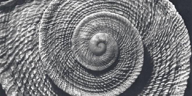 «El caracol de la sierra» por José María Gil Sánchez