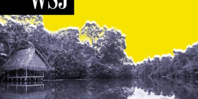 La pandemia también ataca el Amazonas: la deforestación se ha disparado