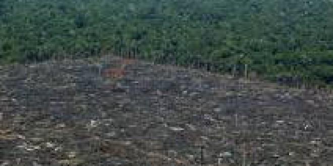 Greenpeace denuncia la importación española de carne procedente de la deforestación de la Amazonia