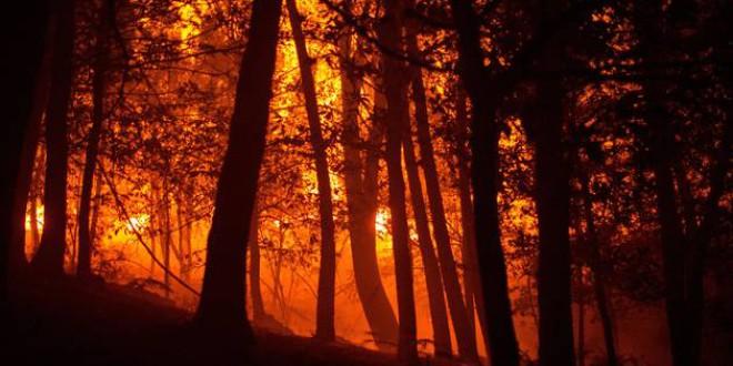 Greenpeace vaticina un verano de incendios dramáticos en varias regiones del mundo que agravará la emergencia climática