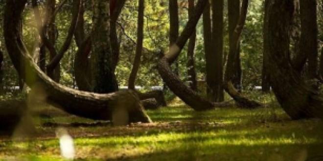 Tras el 20D: ¿Qué pasará con el Medio Ambiente?