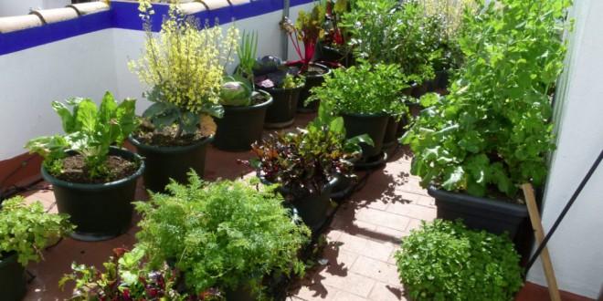 ATARFE: Jornada lúdica de «Jardines comestibles y macetohuertos»